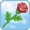 Aphrodite's Rose